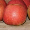 Smak Mrozea Kochamy owoce, produkujemy je z pasją. Chcemy, aby wyjątkowy smak naszych odmian zyskał uznanie wśród Waszych rodzin.  Spróbuj i przekonaj się jak smakuje Mrozea. Dowiedz się więcej...