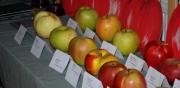 Największe Jabłko - konkurs 2011